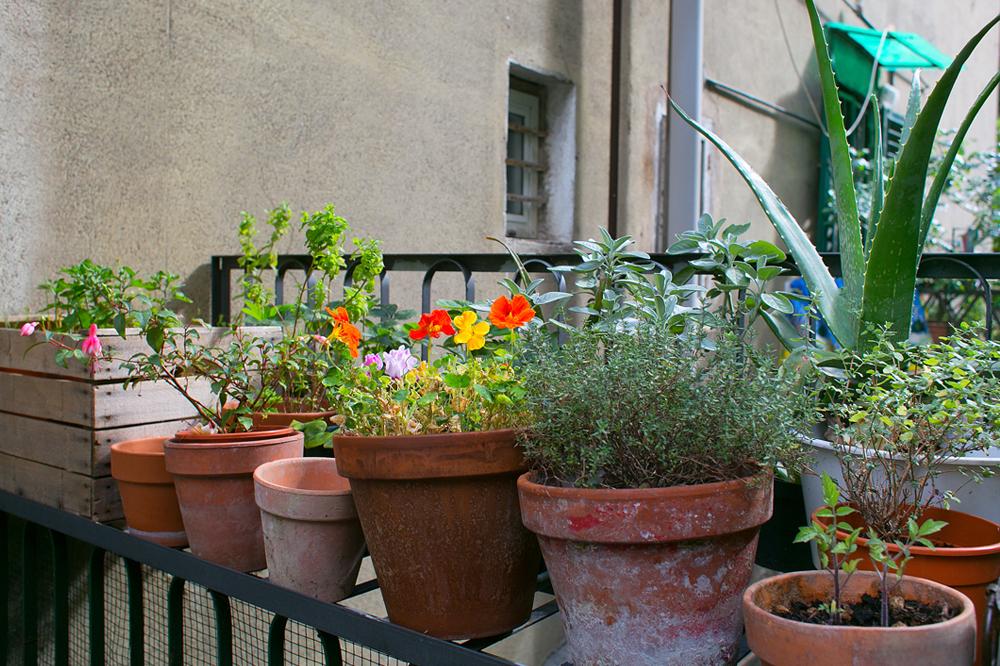 giardino.regalato-giardino genova (3)